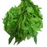 Fresh Ewedu Leaf