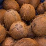 Fresh Coconut Fruit